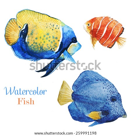 Emperor angelfish,fish, watercolor, tropical fish - stock photo