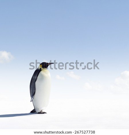 Emperor Penguin in Antarctica - stock photo