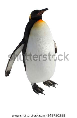 Emperor penguin walk on snow - stock photo