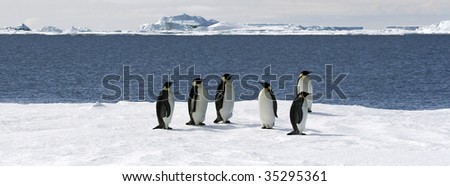 Emperor penguins (Aptenodytes forsteri) on the ice in the Weddell Sea, Antarctica - stock photo