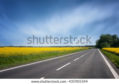 empty asphalt road and floral field of yellow flowers. natural  background. - stock photo