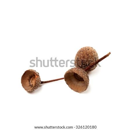 Empty autumn acorn hats isolated on white background. - stock photo