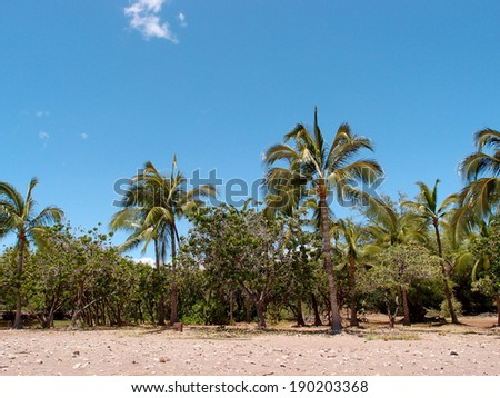 Empty Beach with Coconut and other trees on Big Island, Hawaii. - stock photo
