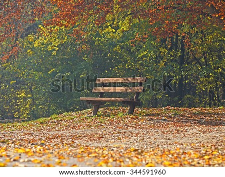 Empty bench in autumn forest - stock photo