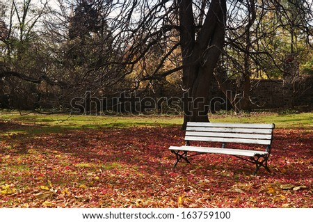 Empty bench under maple trees, falling leaves on ground  - stock photo