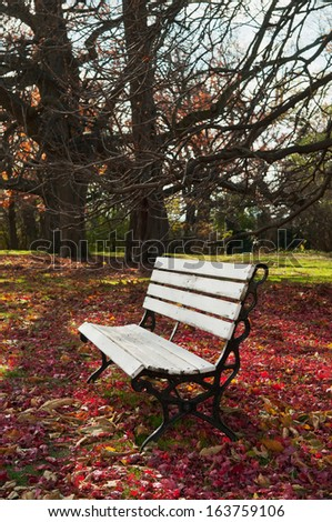 Empty bench under maple trees, falling leaves on ground