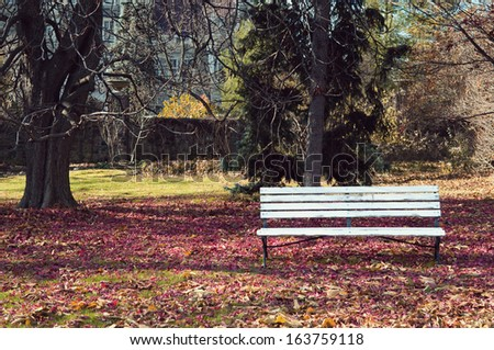 Empty bench under maple trees wraped into autumn colors - stock photo