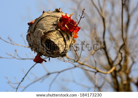Empty bird nest hanging from a branch during fall season  - stock photo