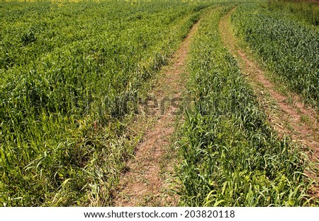 Empty country road in a field sown with oats. - stock photo