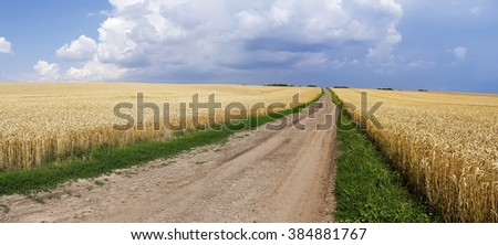 Empty countryside road through fields with wheat. Ukraine, Europe. (panorama)