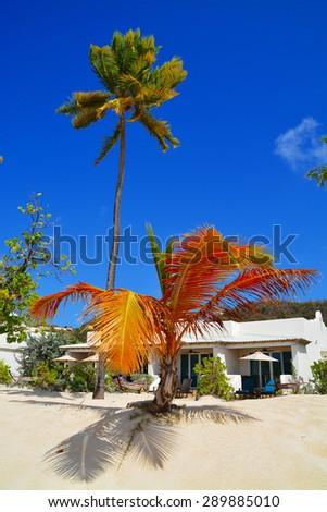 Empty Grand Anse Beach, Grenada, caribbean - stock photo