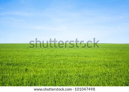 Empty Grass Field with Blue Sky - stock photo