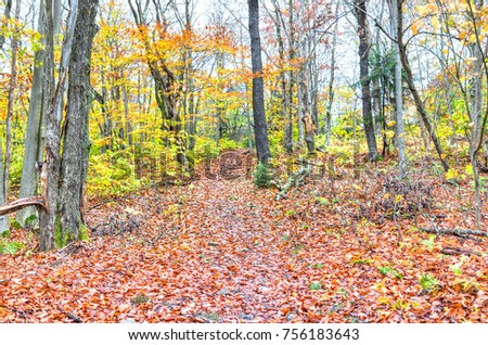 Empty hiking trail through colorful orange foliage fall autumn forest with many fallen leaves on path in West Virginia