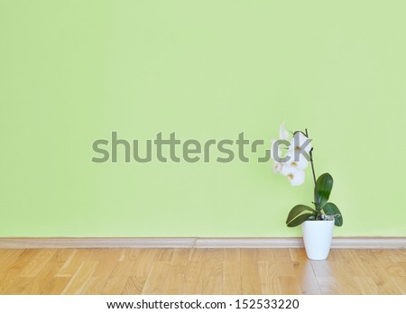 empty interior with a green wall flower - stock photo