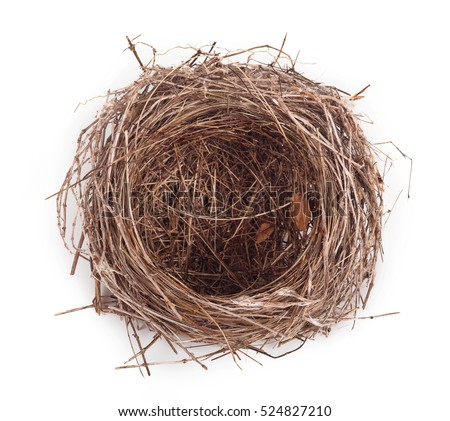 Empty nest isolated on white background