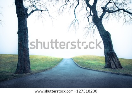Empty path with trees to unknown place on a cold day - stock photo
