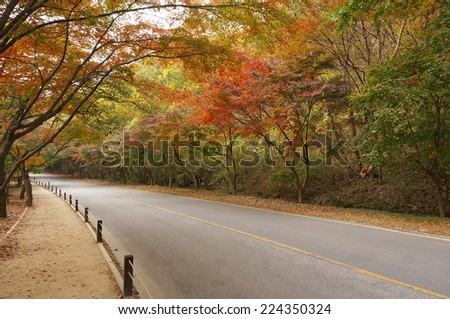Empty road in forest during autumn - stock photo