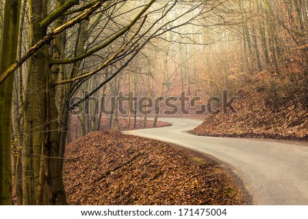 Empty road in forest during autumn with bright light shining through - stock photo