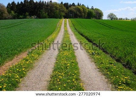 Empty road in rural environment - stock photo