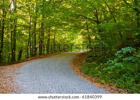 Empty road in the summer forest or park - stock photo