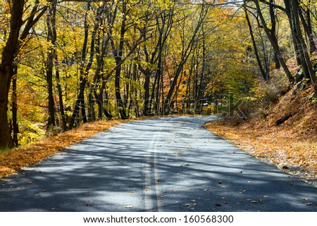 Empty road through a golden fall forest in New York - stock photo