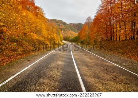 Empty rural asphalt road in autumn with colored trees in Arkhyz, Karachay-Cherkessia, Russia