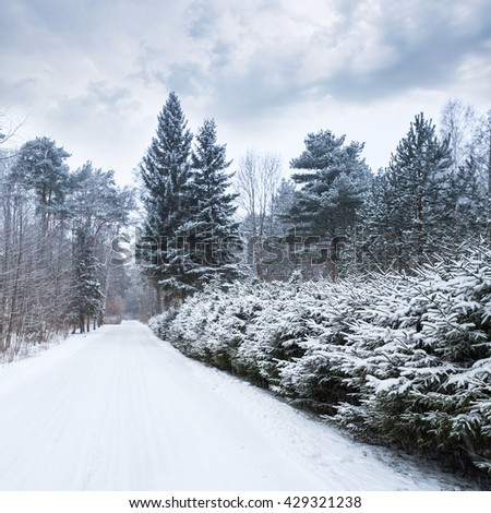 Empty rural road covered with snow goes along European forest in cold winter season - stock photo