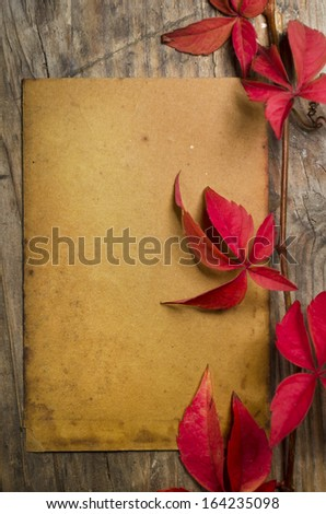 Empty sheet and red ivy - stock photo