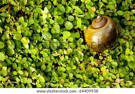 Empty snell shell in among of tiny plant as a background