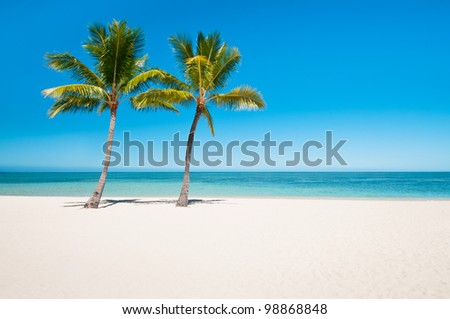 Empty tropical beach with palms - stock photo