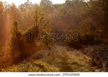 Empty walkway in autumn foggy forest