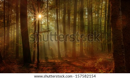 Enchanted Autumn Forest with the lovely rising morning sun. Leaves on the ground and light fog in the air. Warm rays of the sun shine through the deciduous woods of Upper Franconia / Bavaria, Germany. - stock photo