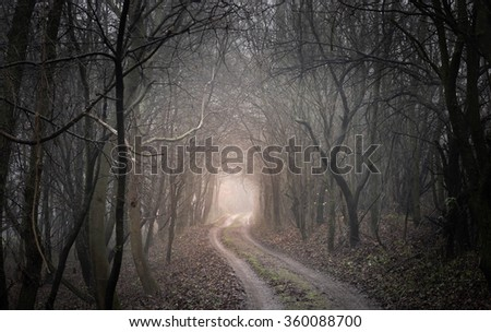 enchanted forest - stock photo