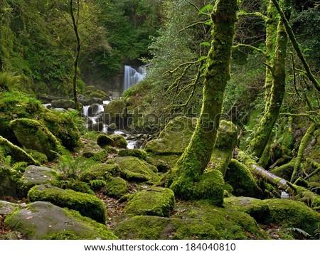 Enchanted Forest and creek near Torc Waterfall, Killarney National Park, County Kerry, Ireland  - stock photo
