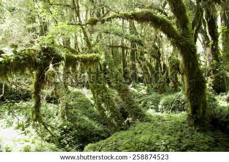 Enchanted Forest - Queulat National Park - Chile