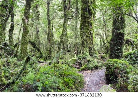 Enchanted Forest, Queulat National Park (Chile)  - stock photo