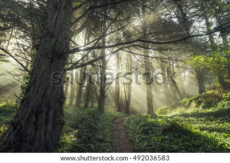 Enchanted forest with light beams coming through trees