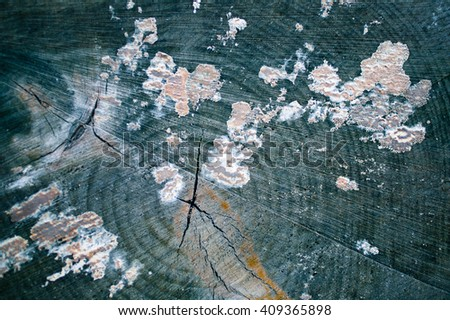 End face of an old birch log. Background texture - stock photo