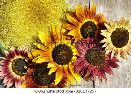End of summer with sunflowers
