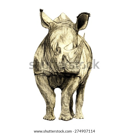 Endangered White Rhino (Ceratotherium simum) facing habitat loss. Front view with head looking to the side. Hand drawn by pencil. On white background.  - stock photo