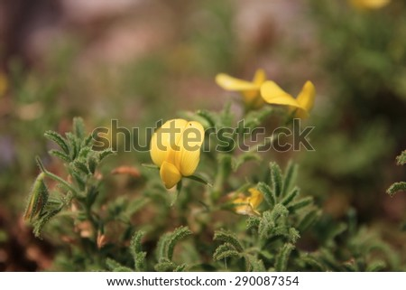 Endemic flowers from Butterfly Valley Turkey