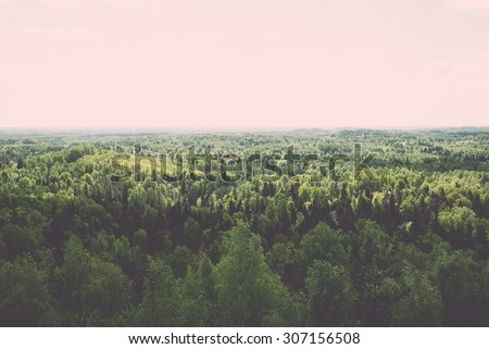 Endless forests in sunny day with perspective in color - vintage retro style effect - stock photo