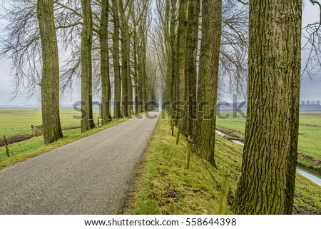 Endless road between an avenue of bare trees during the winter on a dike in dutch farmland.