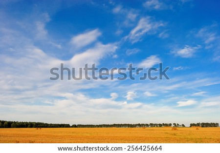 endless sky over the yellow harvested field - stock photo