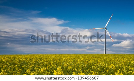 Endless Yellow Canola field and Wind Turbine