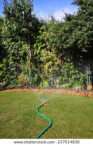 English back garden being irrigated with hose sand sprinkler - stock photo