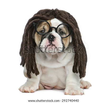 English bulldog puppy wearing a dreadlocks wig and glasses in front of white background - stock photo
