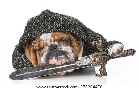 english bulldog wearing knight costume on white background - stock photo