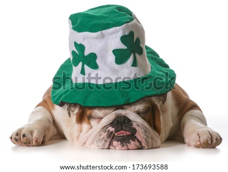 English bulldog wearing St Patrick's Day hat isolated on white background - stock photo