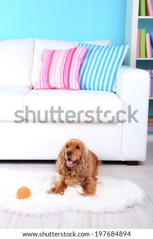 English cocker spaniel on rug near sofa - stock photo